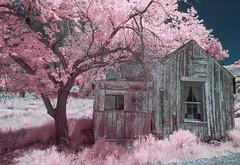 House at Manhattan, NV (Jose Matutina) Tags: abandoned ghosttown gold historical history house infrared lifepixel manhattan mining nevada sel16f28 sonya6000 unitedstates vclecf1