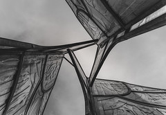 OH (pavelandras) Tags: glass nikon d3400 tamron 18200 tree
