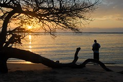 Kosi Bay mouth sunset tree