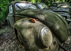 VW Beetle @ Car Graveyard (Jan Hoogendoorn) Tags: duitsland germany autokerkhof cargraveyard michaelfröhlich vw volkswagen kever beetle roest rust