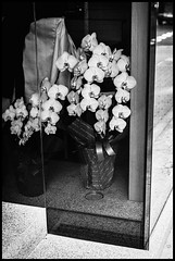 Ebisu, Shibuya-ku, Tōkyō-to (GioMagPhotographer) Tags: tōkyōto japonica shibuyaku ebisu plants leicam9 japanproject japan detail tokyo tkyto lensculture2018submission