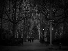 Madison Square Park at Christmas Mono (phdlou) Tags: christmas christmastree mono blackandwhite black white newyork bigapple madisonsquarepark festive walk stroll america usa tree park madisonsquare trafficlights lights
