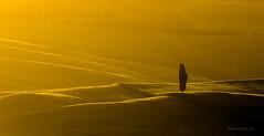 Golden Tuscany (Piotr_ewaipiotr_pl) Tags: ifttt 500px dramatic sky sunrise sun moody dawn backlit silhouette lens flare tuscany cypress