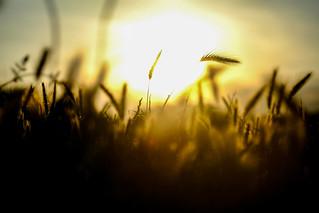 Sun in the fields