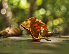 """""""Fallen Leaf"""" (rdwaters) Tags: olympus e520"""