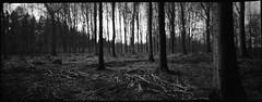 . (Der Ohlsen) Tags: silvercam pseudorama analog 35mm kb bw film c41 kodakbw400cn schleswigholstein deutschland germany