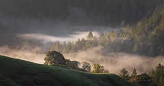 Sonoma County (Bob Bowman Photography) Tags: fog landscape grass oak pine fur trees morning light forest mist green spring california sonomacounty 707
