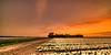Rural Dutch rustic ranch. (Alex-de-Haas) Tags: 11mm adobe blackstone d850 dutch hdr holland irix irix11mm irixblackstone lightroom nederland nederlands netherlands nikon nikond850 noordholland photomatix asparagaceae beautiful beauty bloem bloemen bloementeelt bloemenvelden cirrus floriculture flower flowerfields flowers hyacint hyacinten hyacinth hyacinths hyacinthus hyacinthusorientalis landscape landschaft landschap lente lucht mooi polder skies sky spring sun sundown sunset zonsondergang