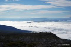 20180527-22-Above cloud layer (Roger T Wong) Tags: 2018 australia mtfield mtfieldeast np nationalpark rogertwong sel2470z sony2470 sonya7iii sonyalpha7iii sonyfe2470mmf4zaosscarlzeissvariotessart sonyilce7m3 tasmania bushwalk clouds mountains outdoors tramp trek walk