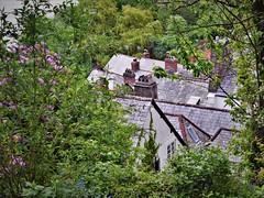 Clovelly rooftops (flowergirlaaa) Tags: clovelly devon rootops slate hillside chimneys slope 7dwf landscape