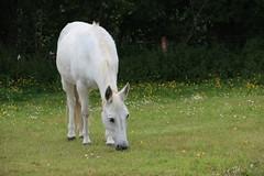 IMG_20180529_123823 (Luna-Woona Moon) Tags: donkeys rescue animals equine devon england