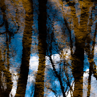 Trees In Water 131