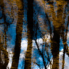Trees In Water 131 (noahbw) Tags: captaindanielwrightwoods d5000 desplainesriver nikon abstract blur branches clouds distortion forest landscape leaves natural noahbw reflection ripples river silhouette sky square trees water winter woods