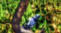 (FOTOS PARA PASAR EL RATO) Tags: paz cdmx aves palomas paloma