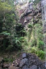Australia_2018-210.jpg (emmachachere) Tags: subtropical trees hike waterfall boatride springbrook australia rainforest kanagroo animals koala brisbane boat lonepinekoalasanctuary