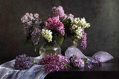 Hints Of The Future (panga_ua) Tags: flickrsbest lilac glassvase water clusters springtime april purple scarf fabric