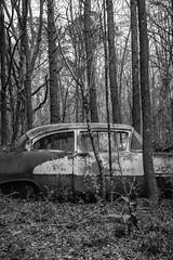 Explaining Nothing (Wayne Stadler Photography) Tags: abandoned preserved junkyard georgia classic automotive derelict overgrown vehiclesrust rusty retro vintage oldcarcity rustographer rustography white