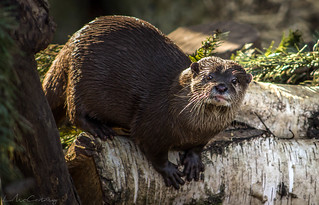 The Otters of the Wetlands