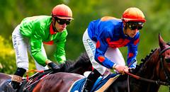 horse-racing (Guy Goetzinger) Tags: goetzinger nikon d850 aarau pferderennen 2018 race horse cource cheveaux jockey winner sport horcerace jagdrennen outdoor duell battle racemeeting