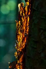 ginger-9361 (Theregsy) Tags: markregan nikond3 nikond800 sigma105mmf28macro sigma50500mm theregsymarkreganphotography watchtreenaturereserve wildlife british wild life