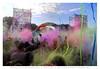 Holi Festival Bassano (Cristian Ferronato) Tags: holi bassano bassanodelgrappa colore colors colori doyoulikemyphoto dylk vicenza italia italy festa party holiontour holifestival