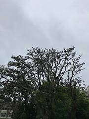 20180611 morning sky (光輝蘇) Tags: sky morning kk