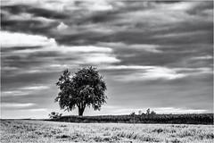 Alone and out-of-focus... (Ody on the mount) Tags: anlässe bäume em5ii fototour himmel mzuiko6028 omd olympus pflanzen schwäbischealb wolken bw clouds monochrome sw trees