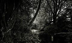 ... es war einmal ... beginnen Märchen. (gabrieleskwar) Tags: outdoor bäume blätter wasser wald baumstamm schwarzweiss licht schatten spaziergang spiegelung lichtung