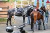 _MG_8382 (dreiwn) Tags: dressage pferd reitturnier turnierreiten pferdesport horse horseback horseriding equestrian reitverein dressurprüfung kandare doublebridle reiten pferde reitplatz ridingarena dressur dressuur