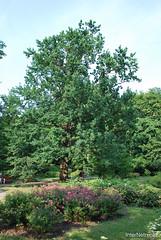 Київ, Ботанічний сад імені Фоміна Ukraine InterNetri 32