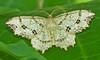 Forest Moth 2 (mishko2007) Tags: moth 105mmf28 korea