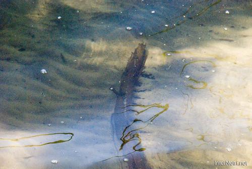 Шацький Національний Природний Парк Озеро Пісочне Прозора вода InterNetri  Ukraine 245