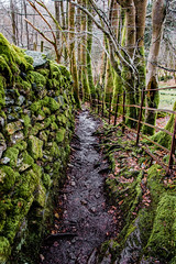 Careful Now (StevePilbrow) Tags: skelwith bridge national trust lake district park cumbria lakes north west england country side water walking trees hill pike muddy brick wall nikon d7200 nikkor 18105mm march april 2018