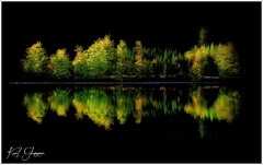 Bäume ..... (Karl Glinsner) Tags: landschaft landscape österreich austria upperaustria oberösterreich langbathsee see lake morgen morning morninglight spiegelung reflection baum tree bäume trees morgenlicht
