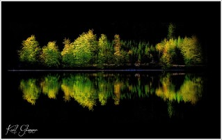 Bäume .....