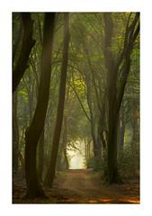 Licht aan het einde (jos.pannekoek) Tags: forest woodland bos veluwe nederland bomen d500 70200f4