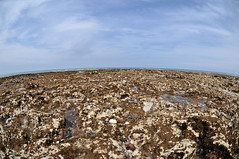 DSC_4906 (Thomas Cogley) Tags: botany bay seaside sea front seafront rockpool rock pool fisheye lens nikon 105mm shore