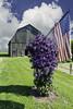 Summer in Rural Michigan (TAC.Photography) Tags: rural barn farm farming clematis americanflag patriotic usa ruralmichigan countryliving