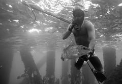 In Hand (181pics) Tags: saltysurfhousing bw blackandwhite underwaterphotography underwater sonya6500 sony gulfofmexico rigs oilrig apnea freediver freediving diving dive mangrovesnapper redsnapper snapper fishin fish