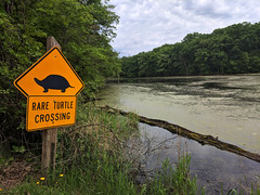 Rare Turtle Crossing Sign (U.S. Fish and Wildlife Service - Midwest Region) Tags: turtle road sign minnesota mn wetland statepark spring summer 2018 june rare threatened blandingsturtle lakemaria publicland departmentofnaturalresources dnr partner