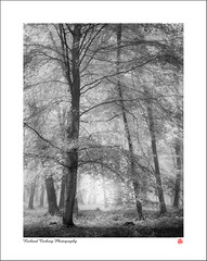Open Winkins (BW) (Chalky666) Tags: tree trees wood woodland forest fog mist southdowns westsussex landscape art mono