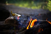 Making tea by the fire (joshhansenmillenium) Tags: canon6d 6d canon red river gorge kentucky camping reflections 50mm clouds hiking adventure campfire relaxing bw snake creek water sunset sun rays