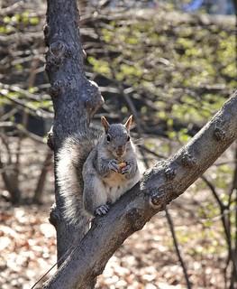 Squirrel 😊