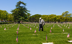 Memorial Day (.sanden.) Tags: grass landscape plant tree people cemetery field flower lawn park grave flora outdoor crowd human military person grassy war outdoors spring meadow man sky yard army leisure soldier