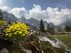 Draba aizoides L. (f.mangili) Tags: draba aizoides val di scalve bergamo alps campelli schilpario flora alpina alpine