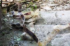 KS4A4375 (Actuality_Media) Tags: bali indonesia actualitymedia studyabroad studyabroad2018 filmabroad travelwithpurpose lifeofafilmstudent filmstudentlife olddominionuniversity abandoned themepark tamanfestivalbali