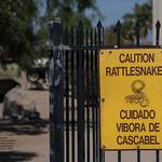 Caution Rattlesnakes thumbnail
