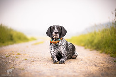 23/52 2018 - Barney (paraleptomys) Tags: 52weeksfordogs
