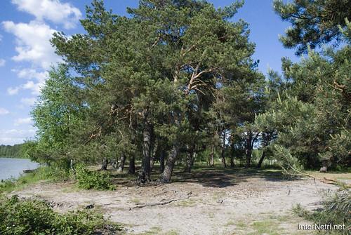 Шацький Національний Природний Парк Озеро Пісочне Сосни InterNetri  Ukraine 354