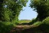 Le chemin (Croc'odile67) Tags: nikon d3300 sigma contemporary 18200dcoshsmc nature paysage landscape arbres trees campagne